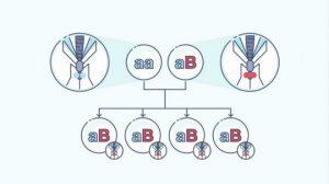 Gene-feed